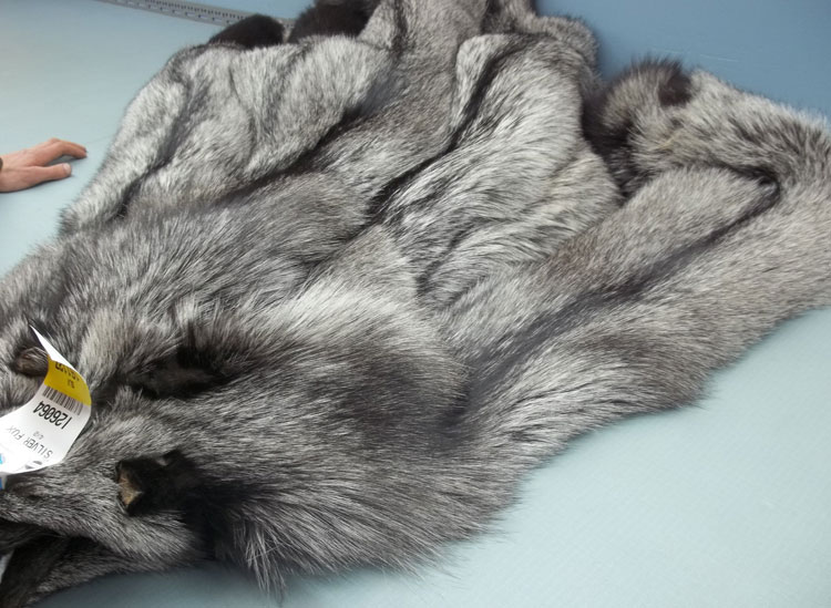 Auction Bundle of Silver Fox Pelts