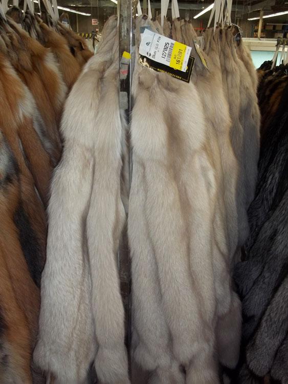 Auction Bundle of Dawn Glo Fox Pelts