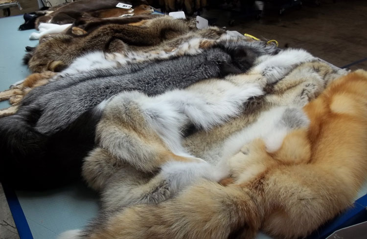 Dressed Furs