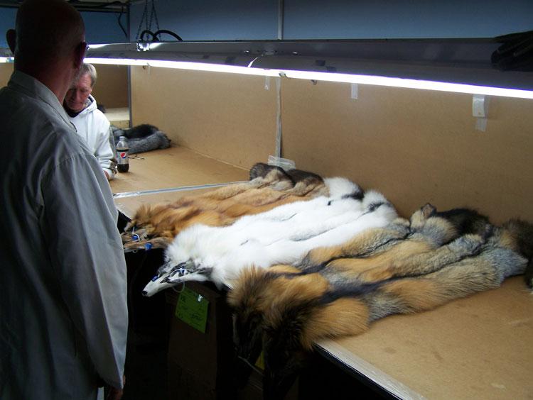 2014 USFSC Fox Pelt Show